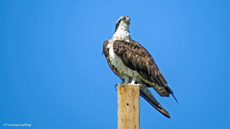 mama osprey 3 ud113
