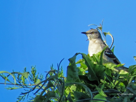Mockingbird UD112