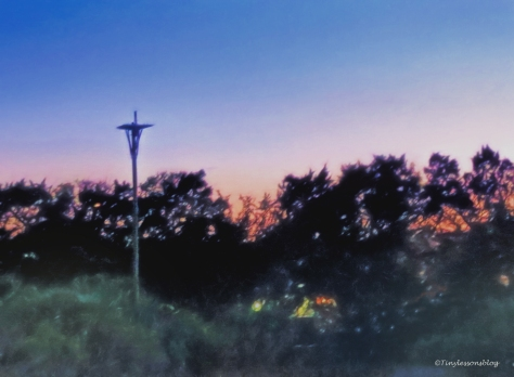 osprey nest at disk ud112