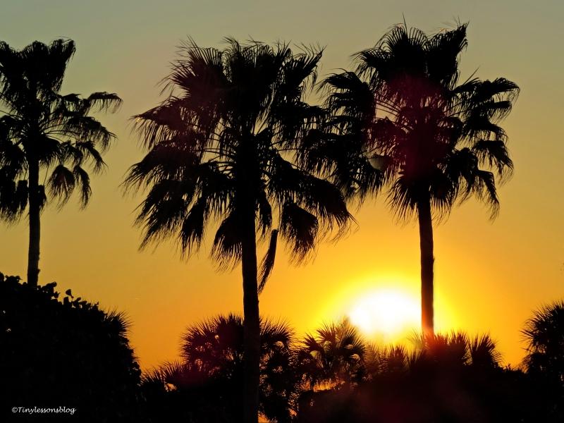 sunset tonight ud112
