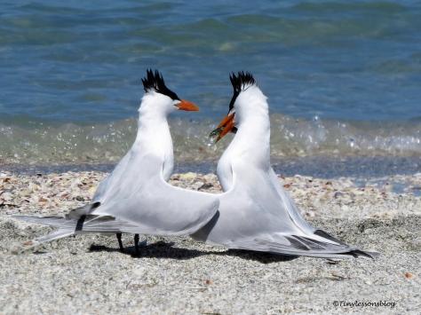 tern couple 1 UD114