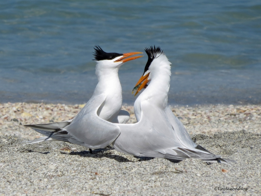 tern couple 4 ud114
