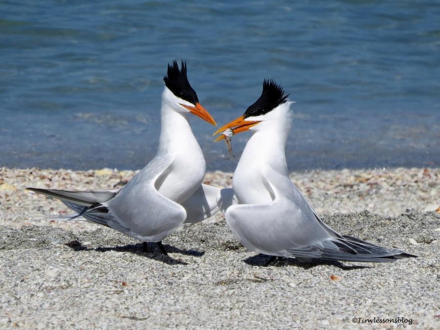tern couple 5 ud114