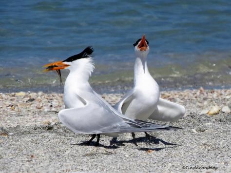 tern couple 6b ud114