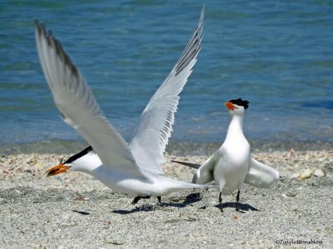 tern couple 7 ud114
