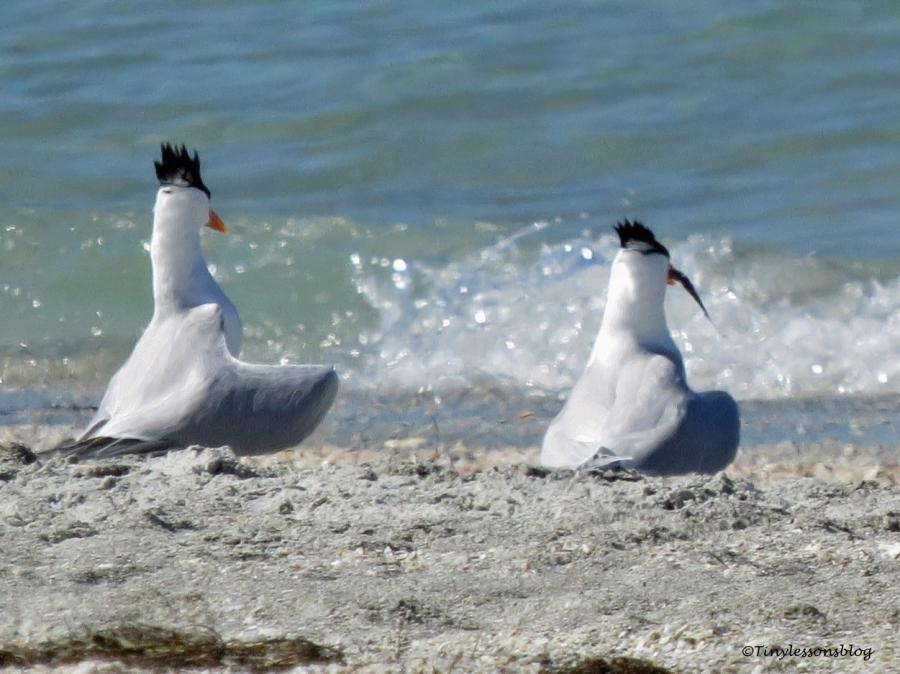 tern couple 8 ud114