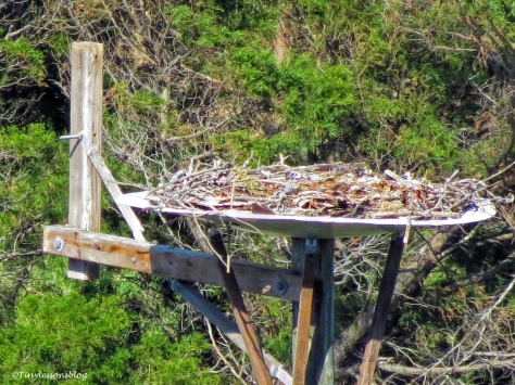 empty nest ud119