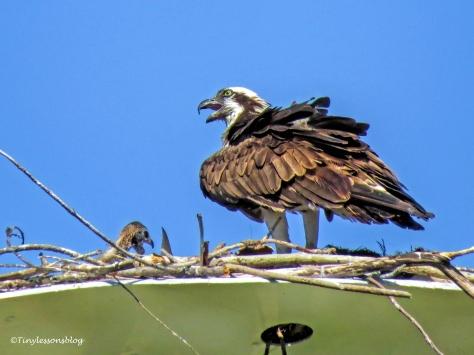 mama osprey and chick sound alarm ud120