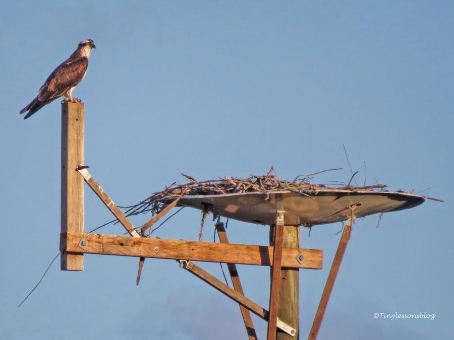 mama osprey minds the kids 2 ud122