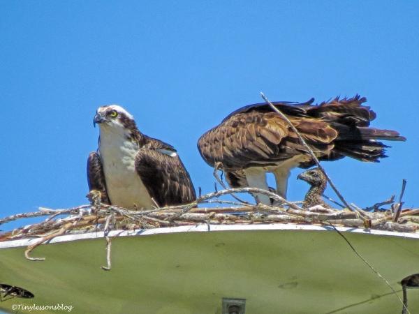 osprey family ud120