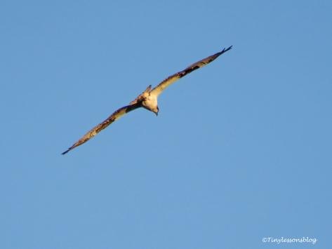 papa osprey evening fishing tour ud122