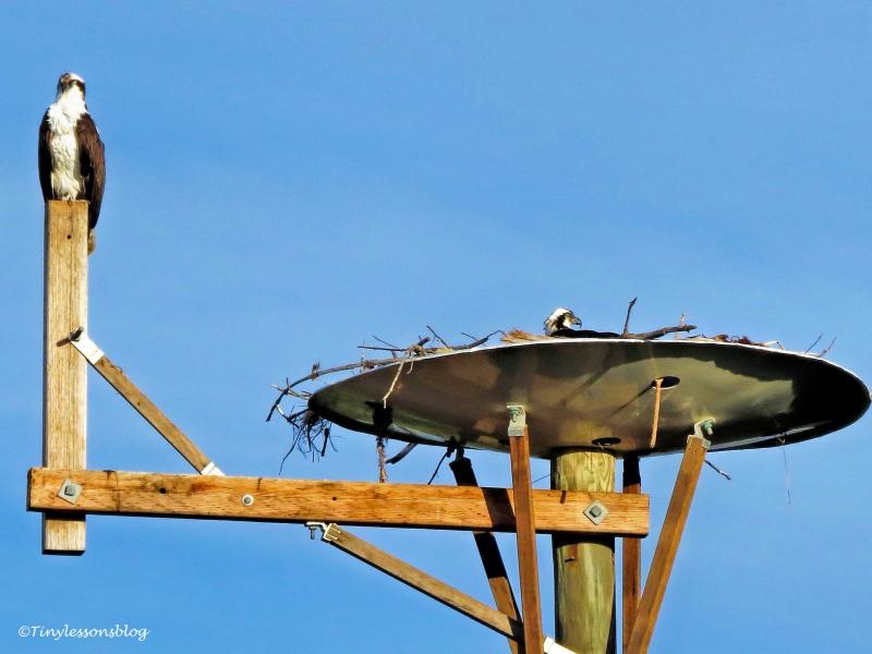 sunset mama and papa osprey ud115
