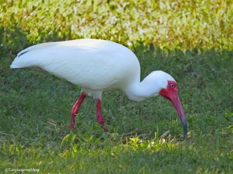 while ibis ud117.jpg