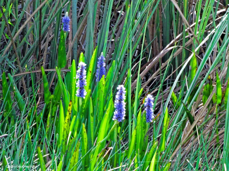 flowers in everglades ud123
