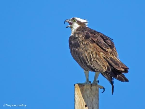 mama osprey alarm ud126_edited-1