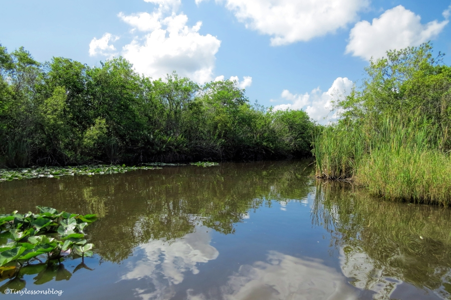 mangroves and sawgrass in Everglades ud123