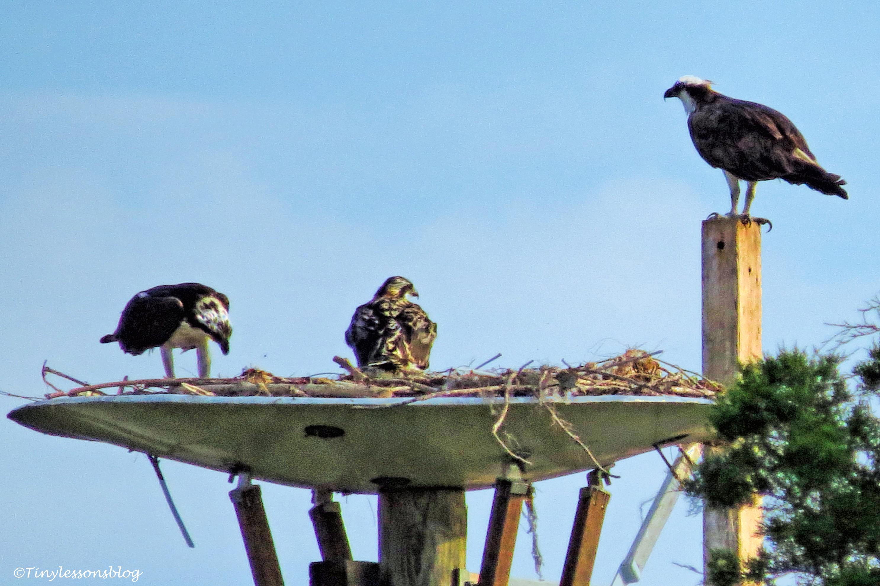 osprey family ud124
