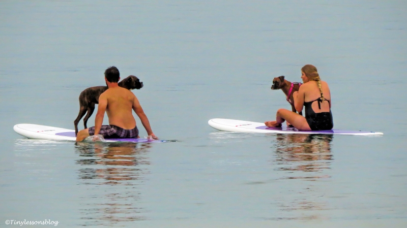 dogs on paddle boards ud127_edited-1