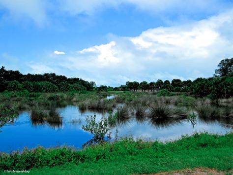 salt marsh after the rains ud130