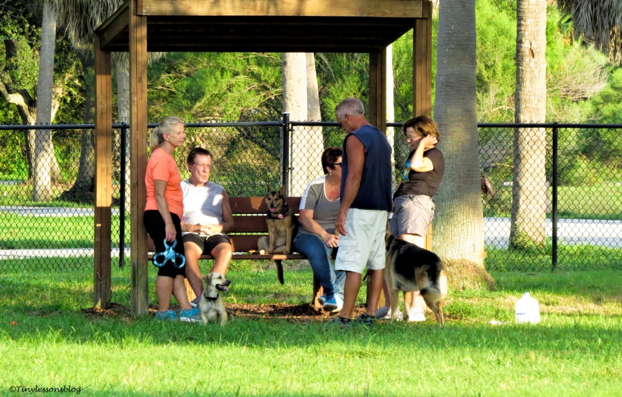 dog park friends 1 ud135_edited-1