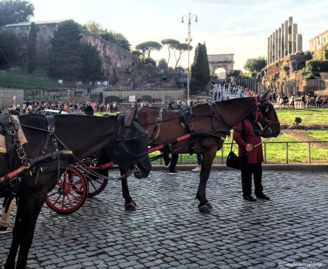 horses at the colosseum Rome