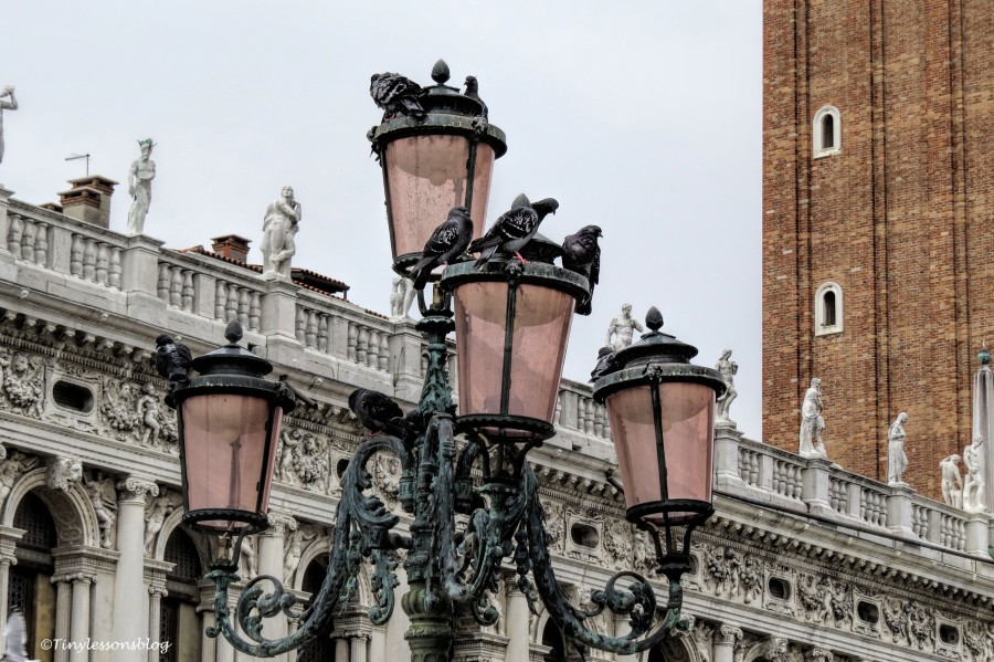 pigeons at Piazza San Marco Venice