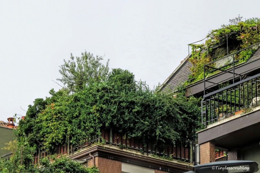 Roof garden Milan_edited-2