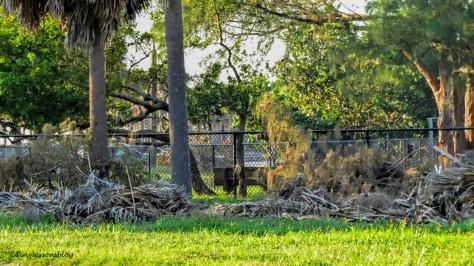 Irma debris at the salt marsh ud141