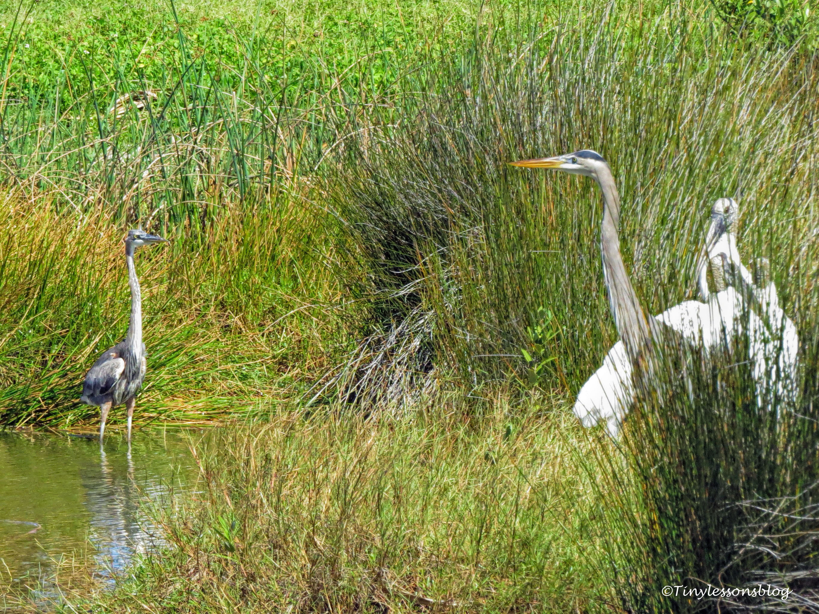 young and old GBH face to face UD141