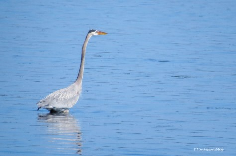 GBH at FDS