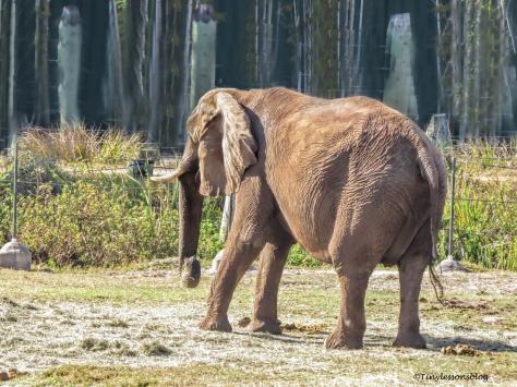 elephant UD148