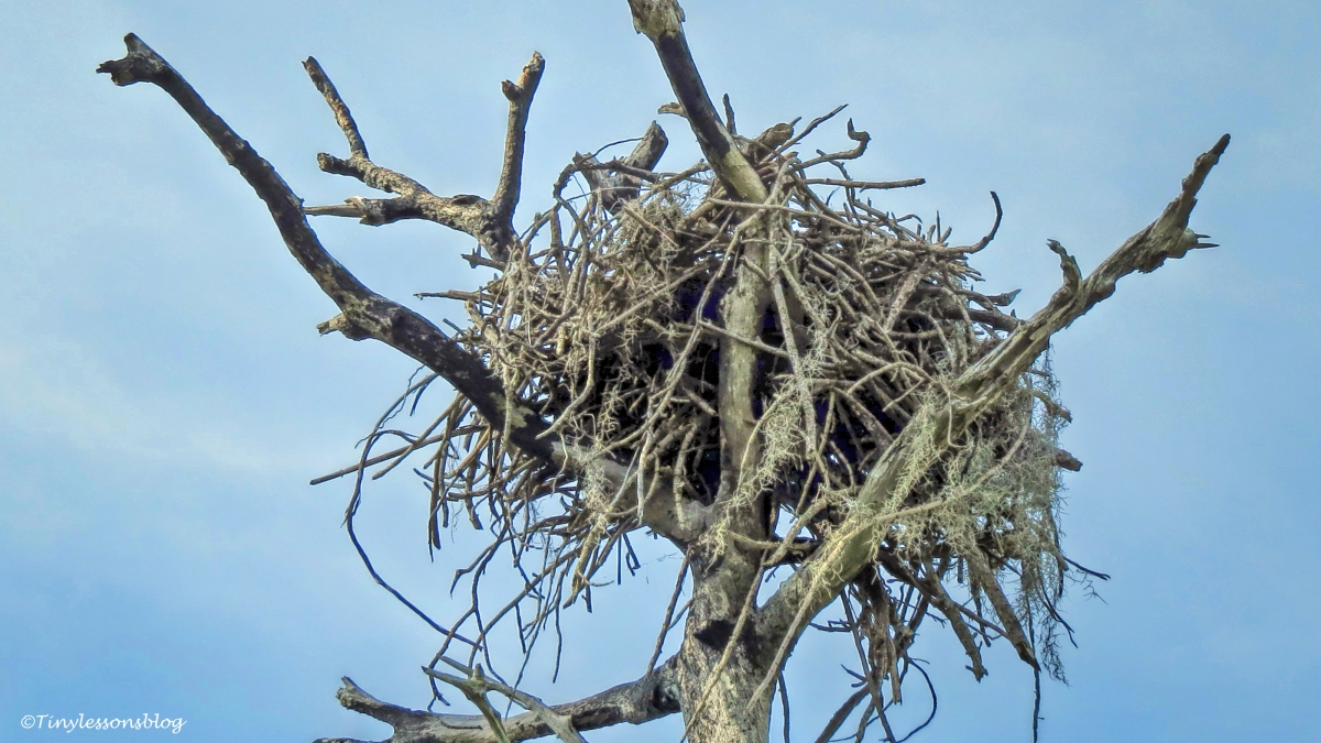 Ospreys and Nests. The Joys and Challenges of Home Ownership (WPC: Variation)