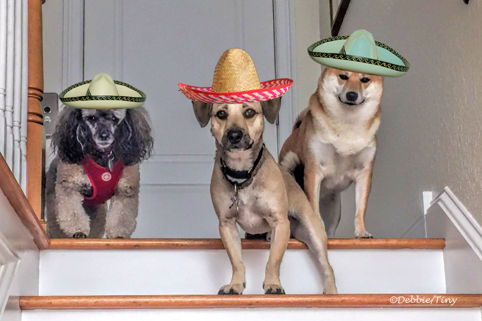 the three amigos ud150_edited-2