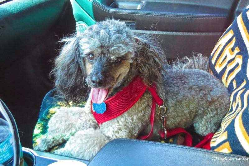 Dylan after hike UD154