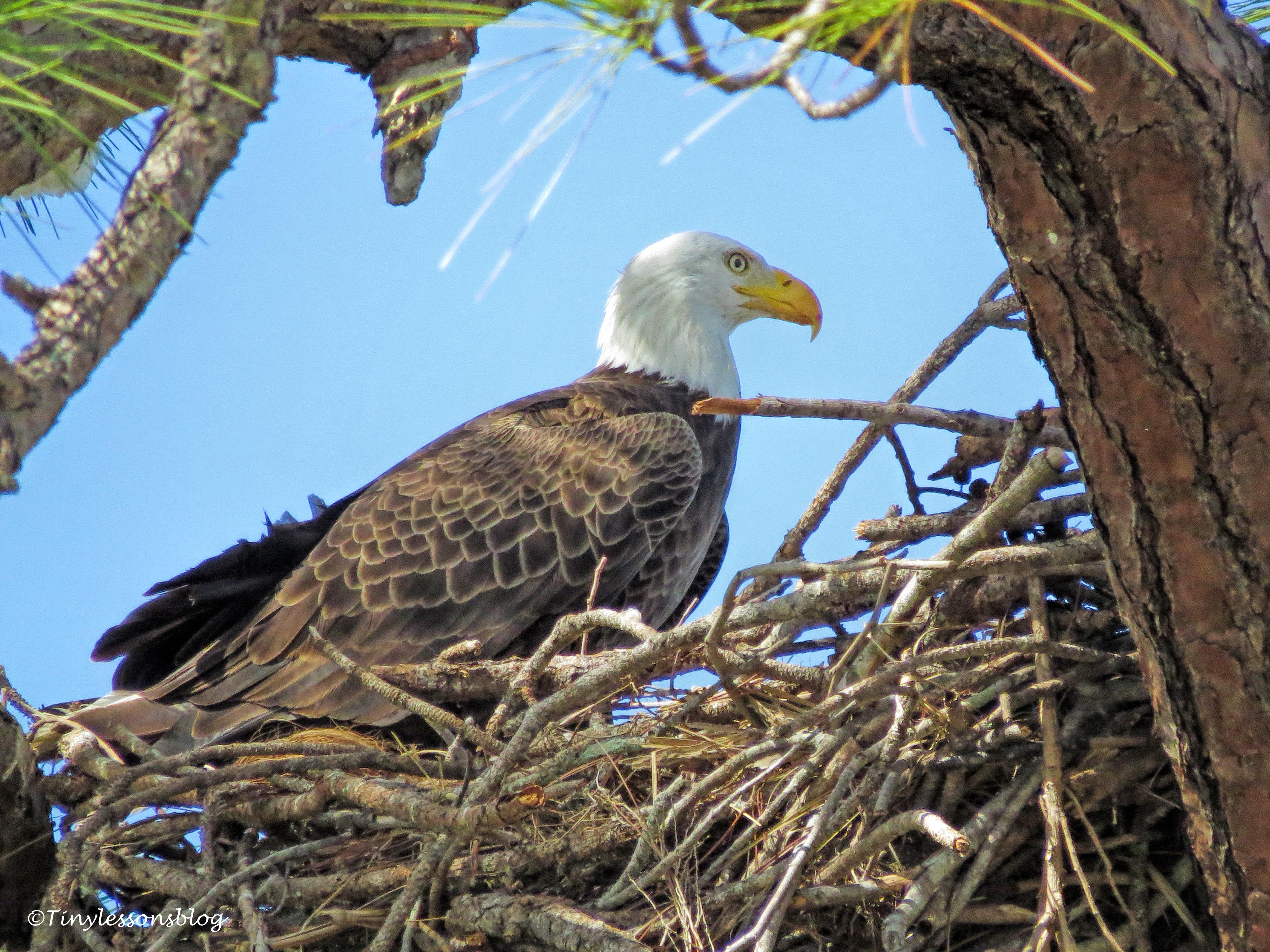 mama eagle UD152