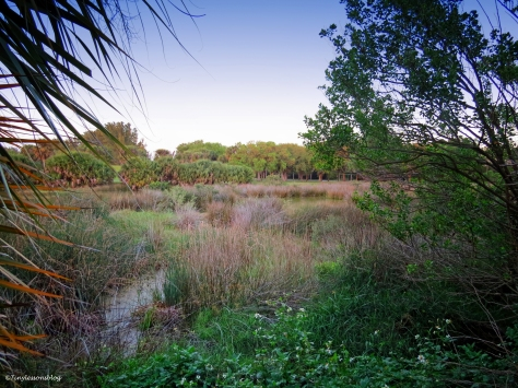 marsh at sunset UD155