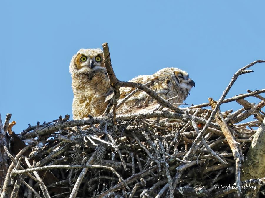one owlet is sleeping HMI UD154