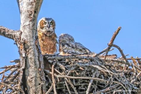 Owlets 2b at HMI UD154