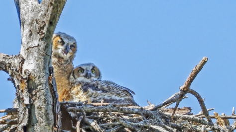 the Owlets on HMI UD154 featured 2