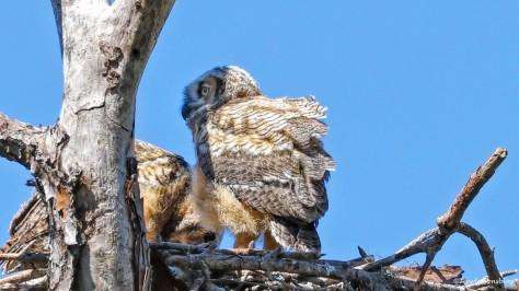 two owlets HMI 16x9 UD154