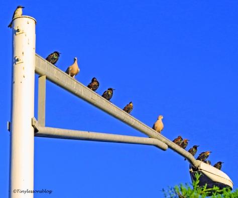 birds at sunrise all varieties UD156