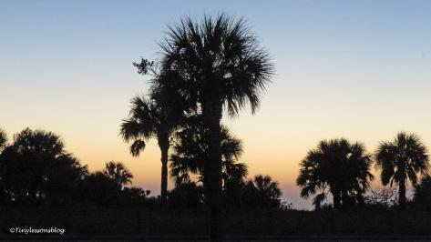 dog park trees at sunset UD156