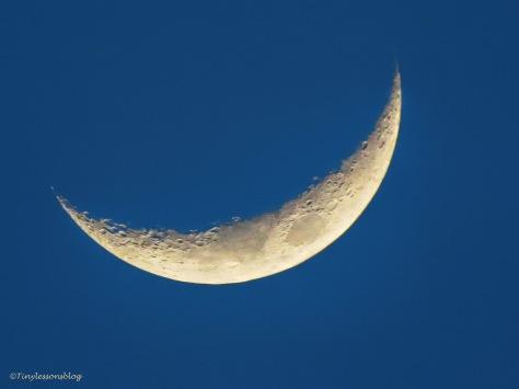 evening moon ud159