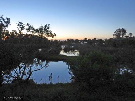 salt marsh 2 at sunset ud156