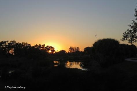 salt marsh at sunset 2 UD159