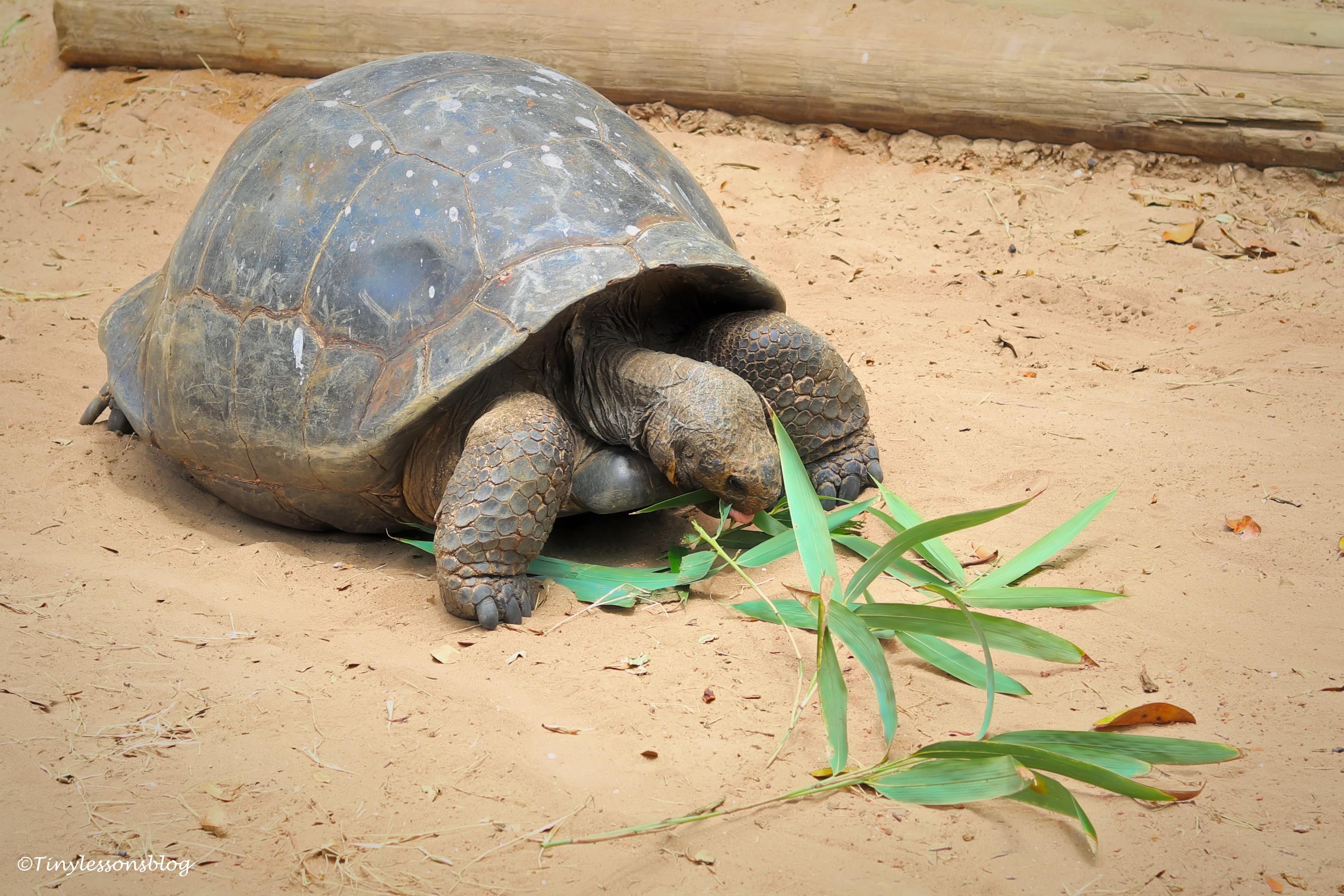 a big turtle ud160