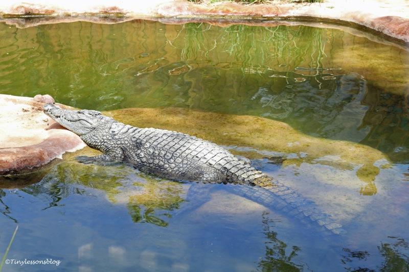 alligator 2 ud160