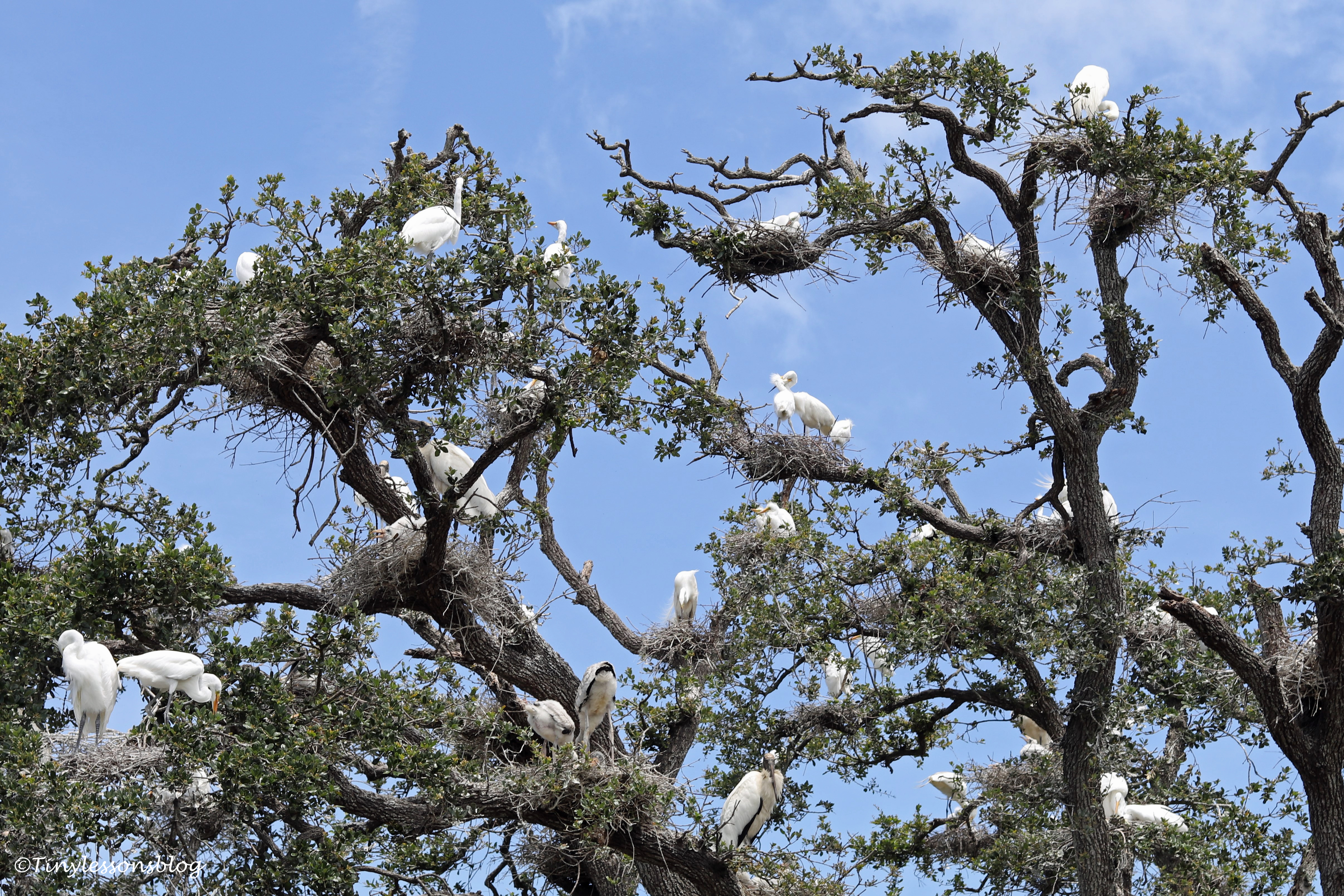 bird trees St Augustine UD160