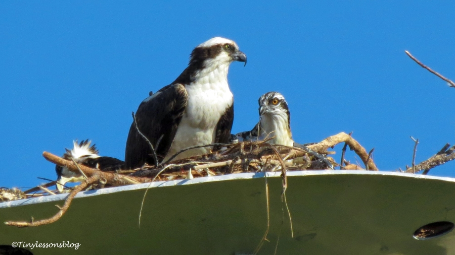 osprey family ud160