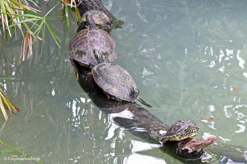turtle caravan UD160